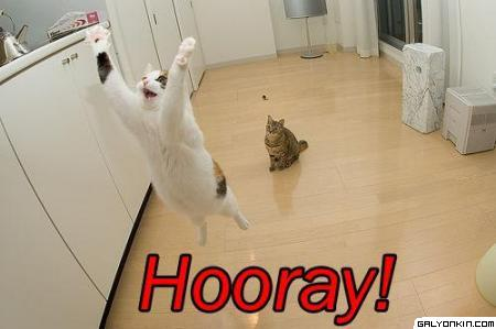 cat-saying-hooray